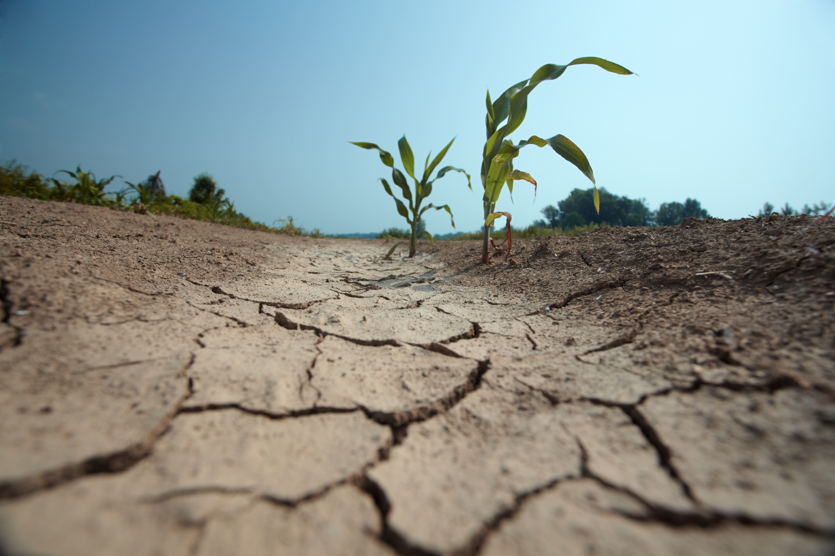 Forecast of the impact of an abnormal drought on the harvesting of spring crops in 2020